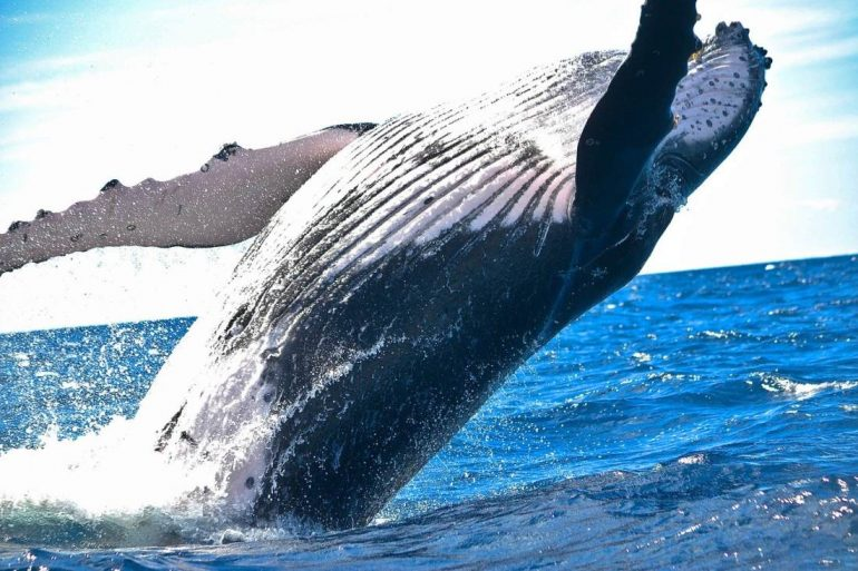 Ethereum Whales Confident of ETH's Price, Move Funds from Exchanges 2